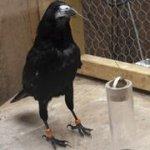 Выдающиеся способности птиц