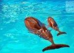 В Одессе дельфиниха рожала во время шоу