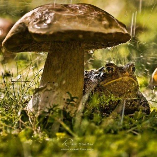 Природа глазами Кристины Котарски