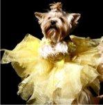 Мода для животных. Модный показ
