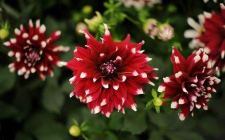 Королевская выставка цветов