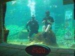 Испанец собрал два кубика Рубика в аквариуме с акулами