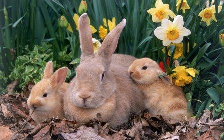 Обои с кроликами на рабочий стол к Новому 2011 году