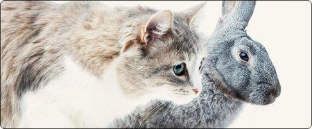 Зайка моя, котик мой