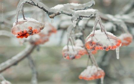 Ледяные обои Марии Прониной