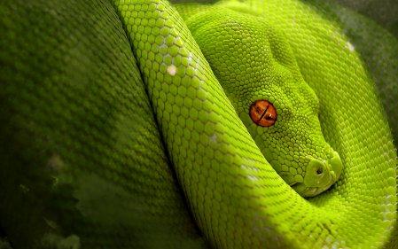 Змеи на рабочий стол