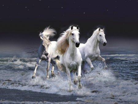 Год лошади обои