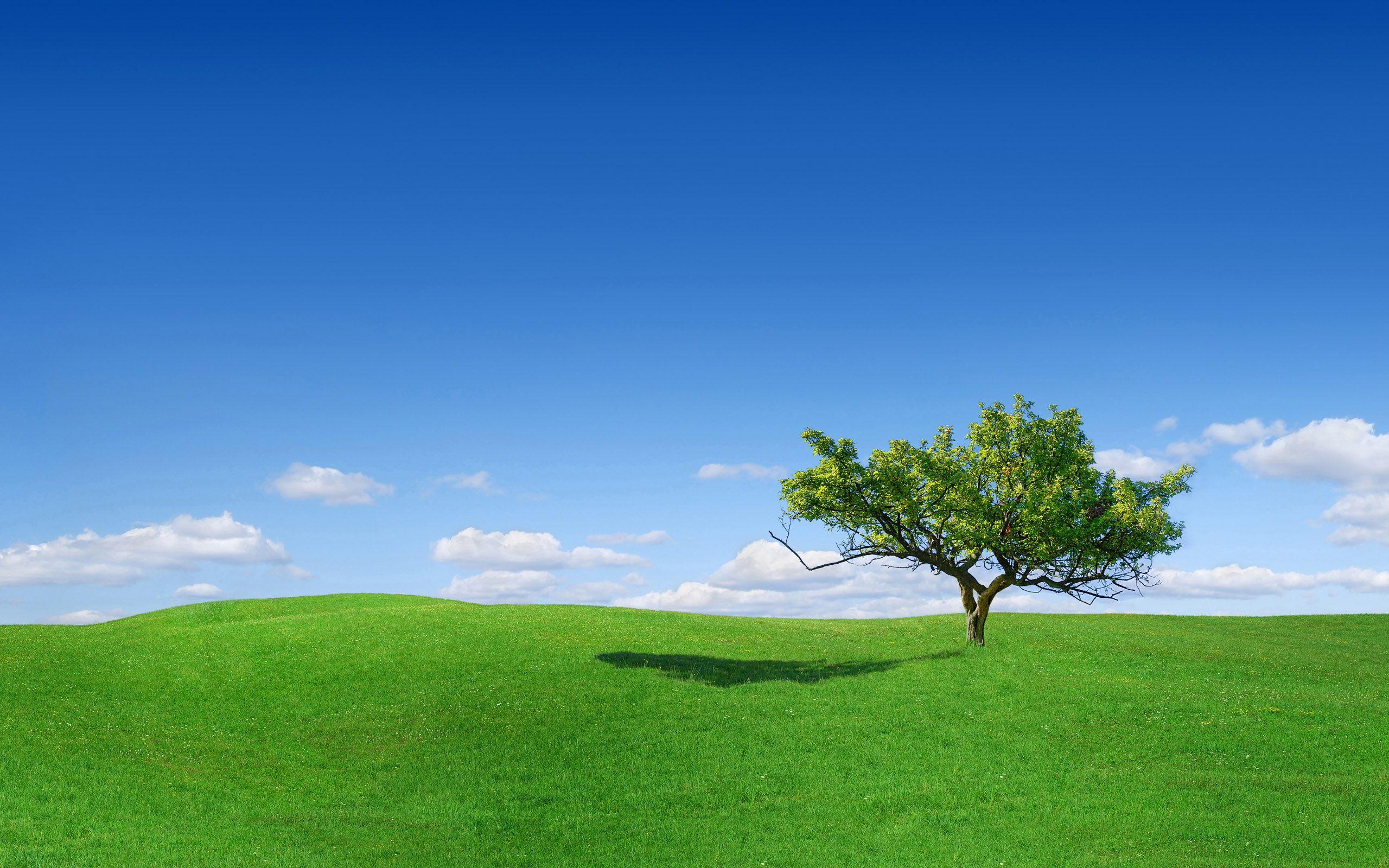 Скачать обои деревья, дерево, трава, поле, небо, фото, обои, пейзажи
